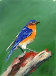 Pássaro em Azul e Laranja