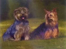 Pequenos Cães - Dominique