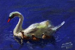 Pequenos Cisnes